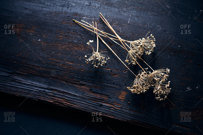 Dried floral seed heads on wood