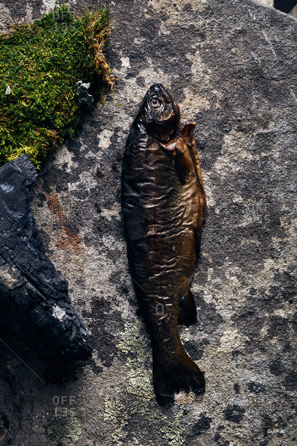 Cooked trout with moss and charred wood