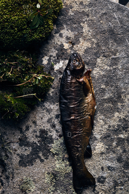 Cooked trout by moss and charred wood