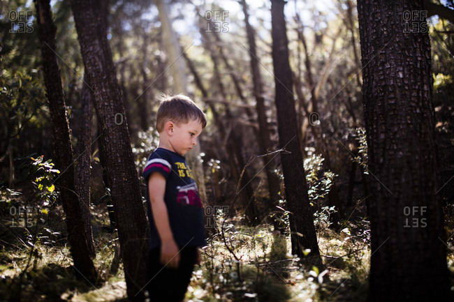 Little boy standing in a forest staring at a tree