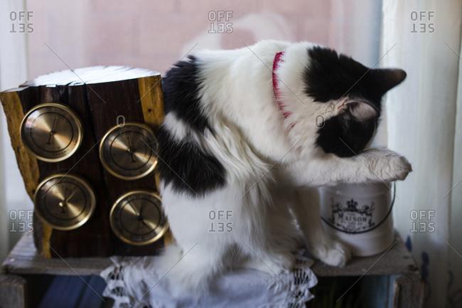 Cat grooming itself on a shelf beside gauges