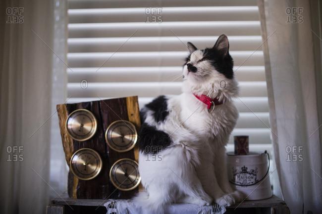 Cat sitting on a shelf in front of a window