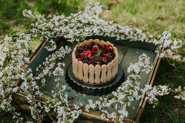 Berry cake on a rustic wooden tray surrounded by cherry blossoms
