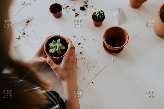 Woman potting cactus and succulents in small pots