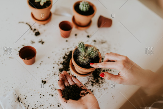 Woman patting soil into a pot with a small cactus plant