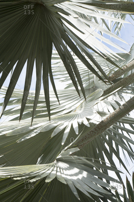 Palm fronds in sunlight setting