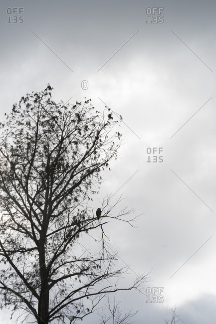 Bird silhouetted on bare tree
