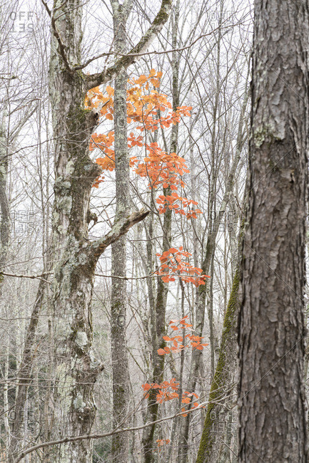 Fall leaves in wooded setting