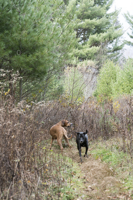 Two dogs exploring countryside