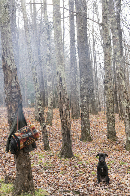 Dog in woods by clothes on tree