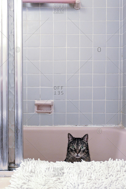 Cat looking out from bathtub