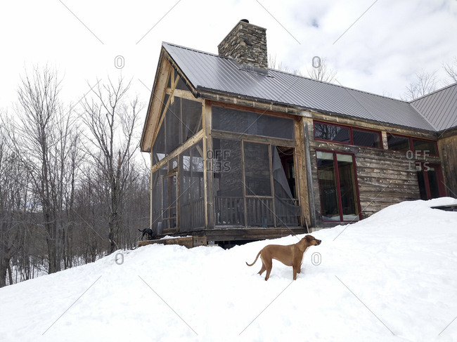 Dogs exploring by cabin in winter