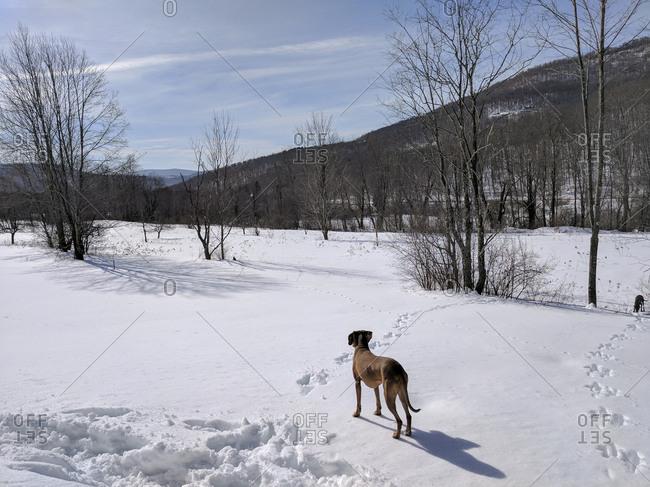 Dog staring into winter setting