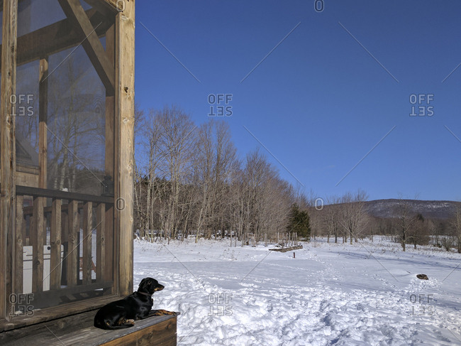 Dog on porch by snowy winter yard