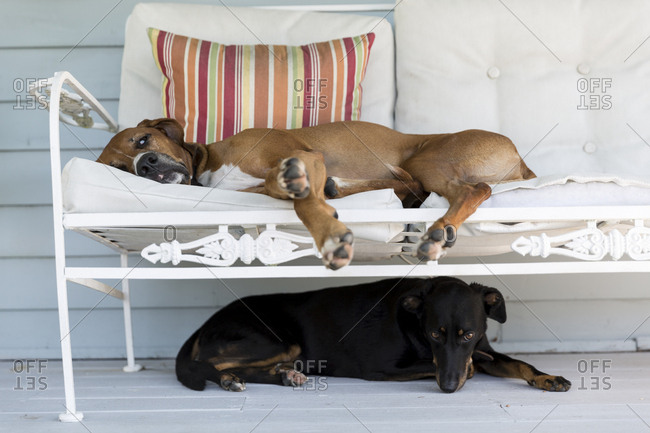 Two dogs lying on porch together
