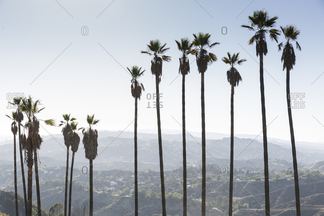 Palm trees over hills