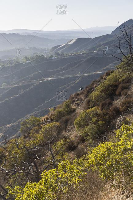 Brush growing on mountain hillside