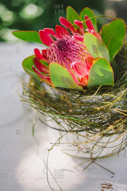 Close up of pink sugar bush wedding floral arrangement