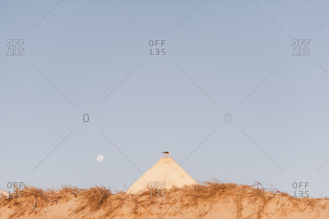 Moon rising over bird on a sand hill in Langebaan, South Africa