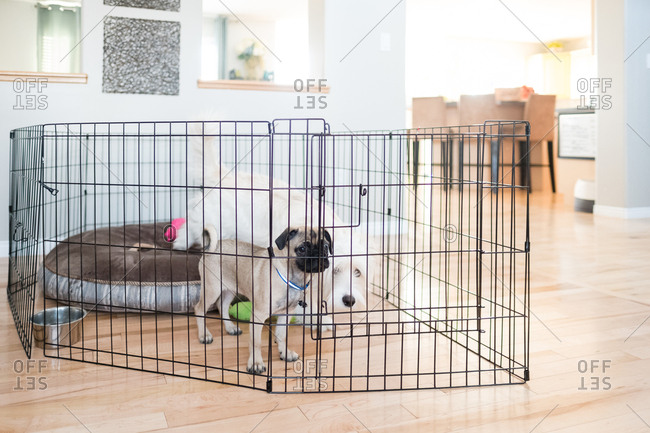 Dogs in a crate in home