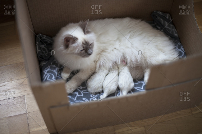 Cat with kittens in box