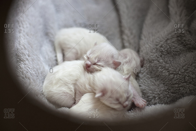 Kittens lying on blanket together
