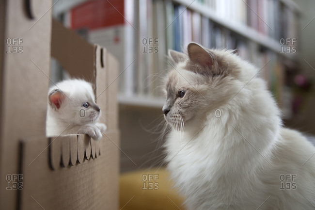 Mother cat looking at her kitten