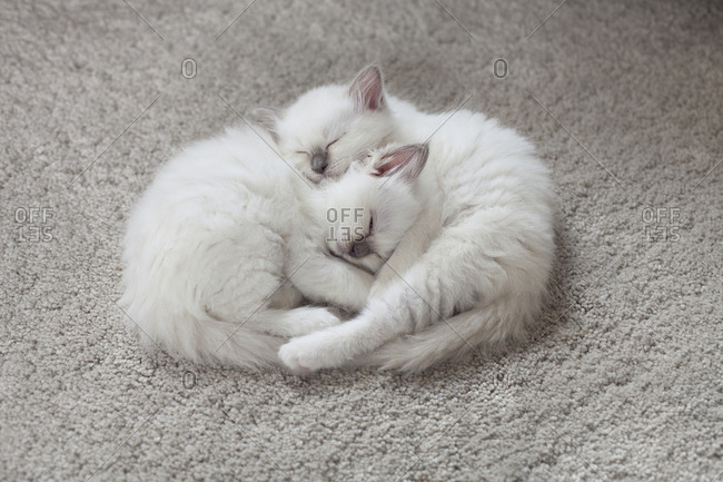 Two kittens asleep together