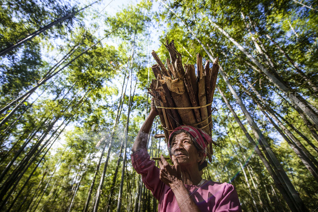 Low angle view of Asian man carrying stick bundle on her head