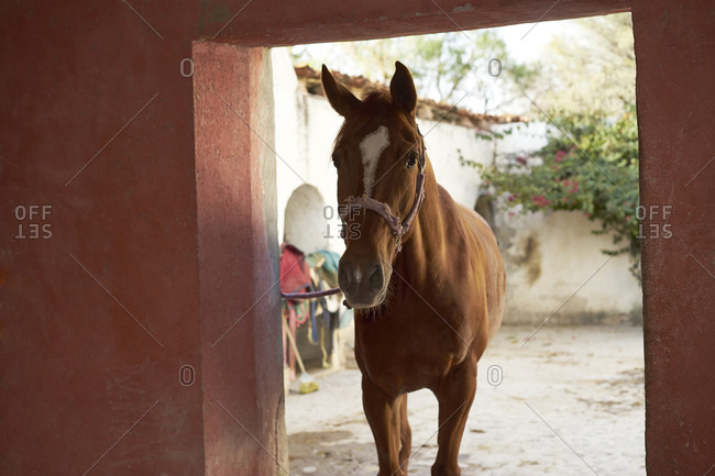 Horse walking into stable on ranch