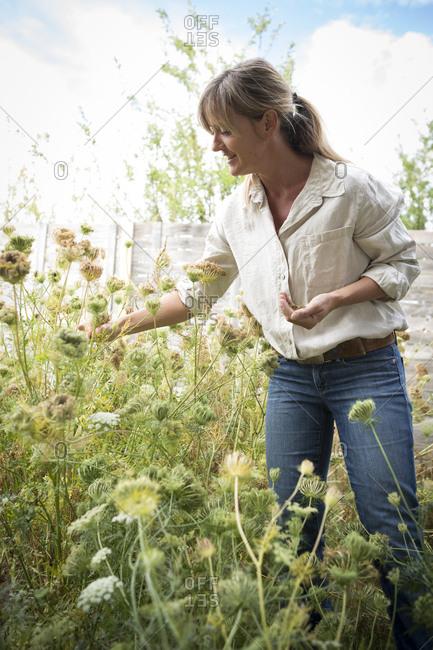 Caucasian woman harvesting flower seeds in garden