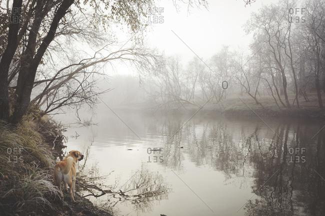 Dog exploring misty rural lake