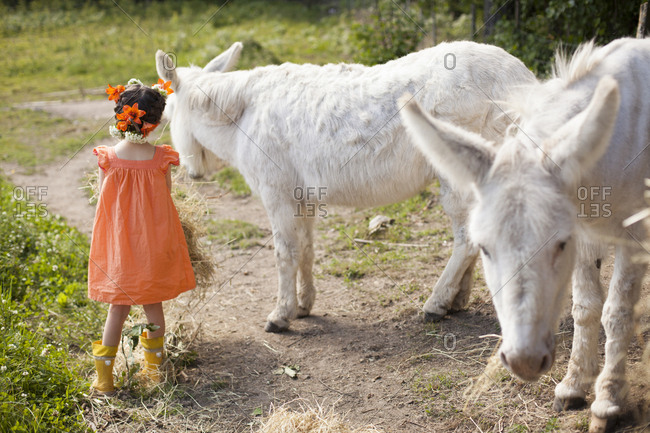 Caucasian girl playing with donkeys on dirt road