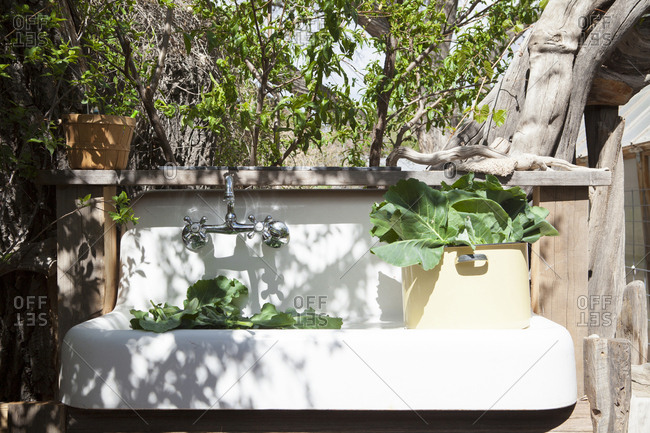 Plants in outdoor sink in backyard