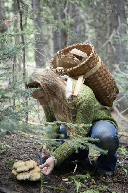 Woman foraging for mushrooms in forest