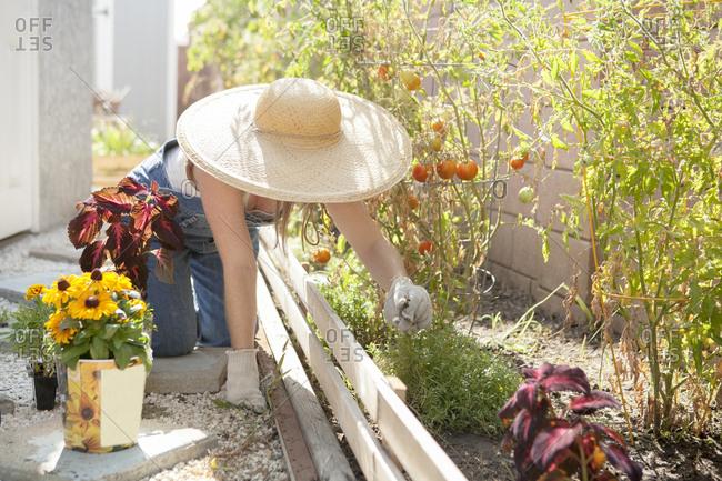 Mixed race farmer working in garden