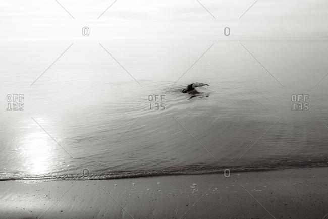 Bird swimming in ocean