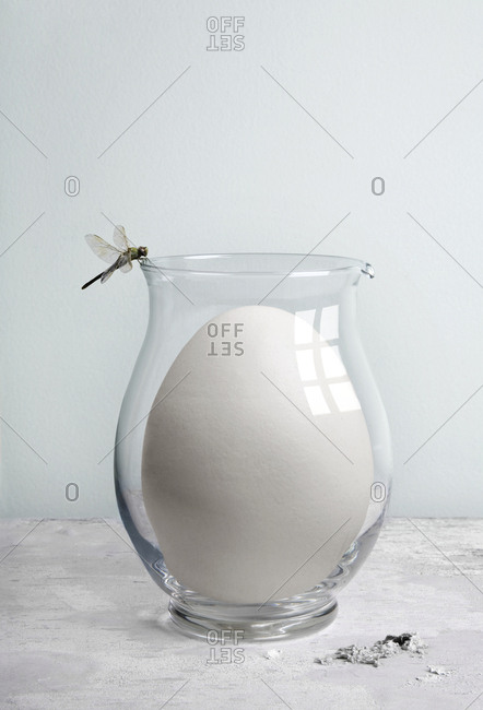 Dragonfly perching on glass pitcher with oversized egg
