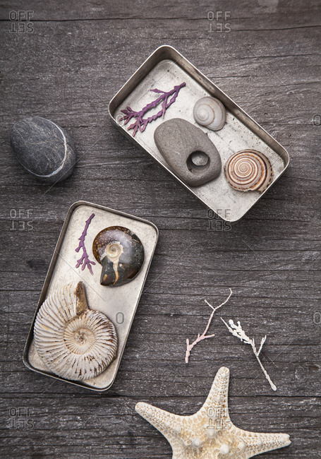 Tins of collected seashells and pebbles