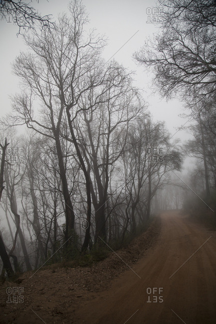 Bare trees over misty dirt path