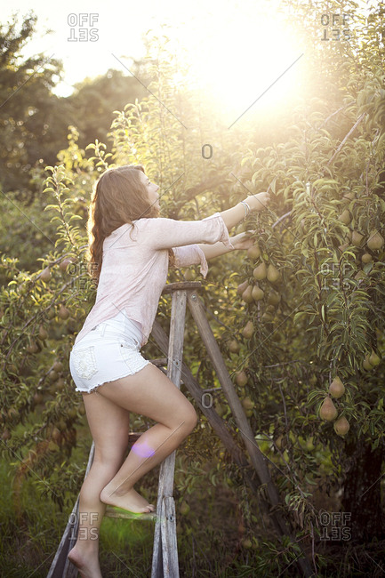 Woman picking fruit on ladder in orchard