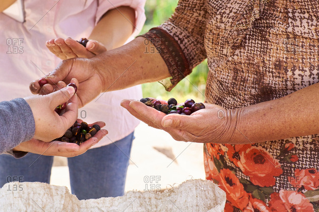 Women inspecting coffee cherries