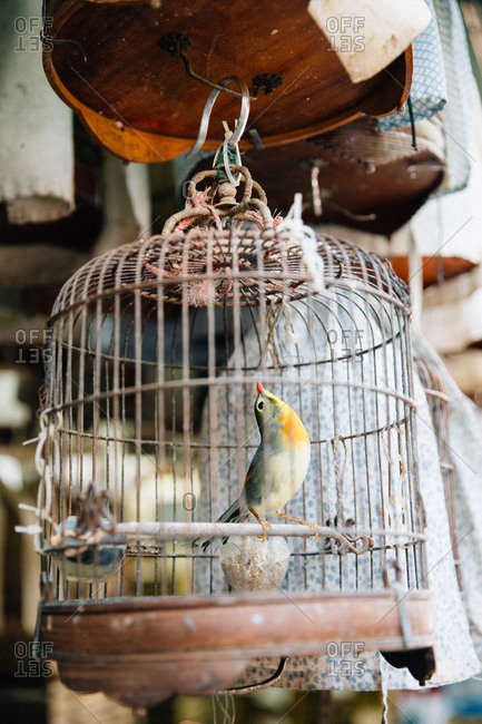 A caged bird at the Yuen Po Street Bird Garden in Hong Kong