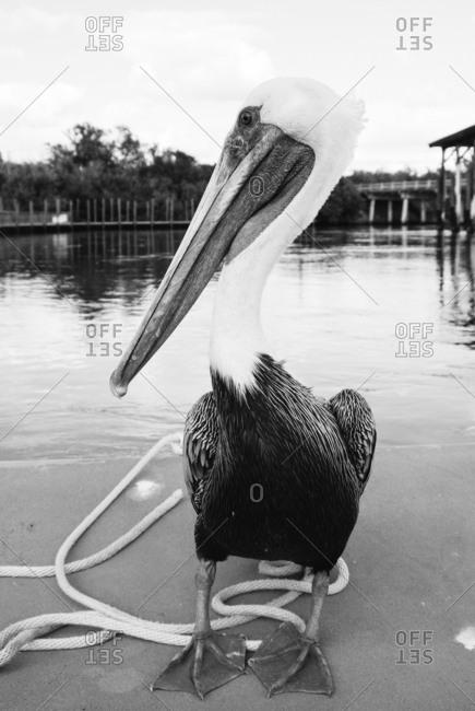 A pelican on a beach in Florida