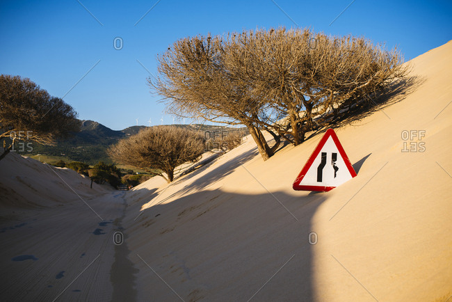 Road between trees and sand dunes near the coast
