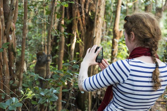Tourist taking a photo of a Grey Bamboo Lemur