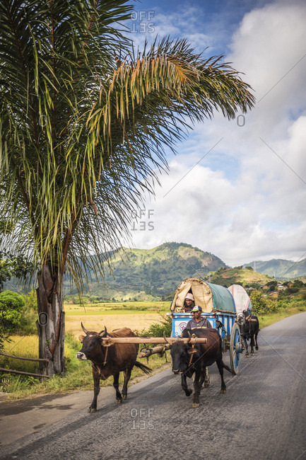 Antananarivo, Antananarivo, Madagascar - June 17, 2016: Zebu (Ox) drawn cart