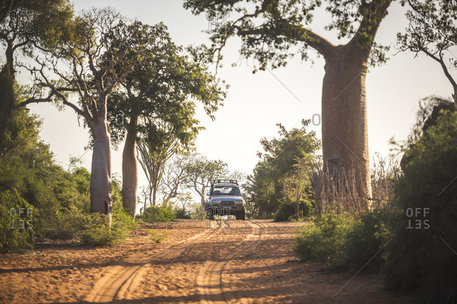 Ifaty, Toliara, Madagascar - June 17, 2016: 4WD driving through spiny forest
