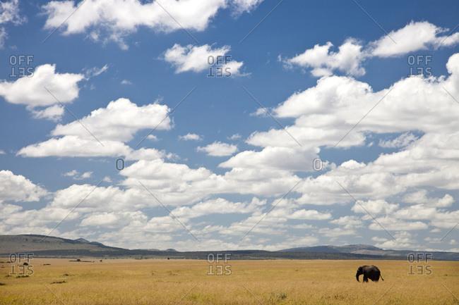 Elephant, Masai Mara National Game Reserve