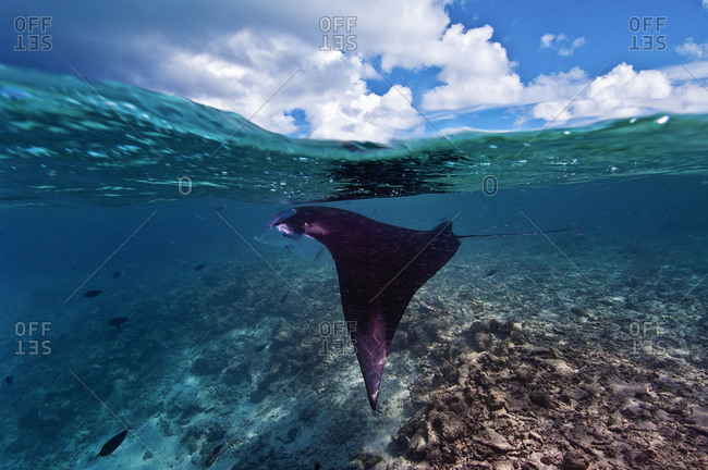 A Manta under the blue sky